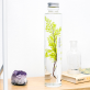 Plant in a large bottle - Slow Pharmacy 14