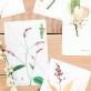 Cards - Herbarium
