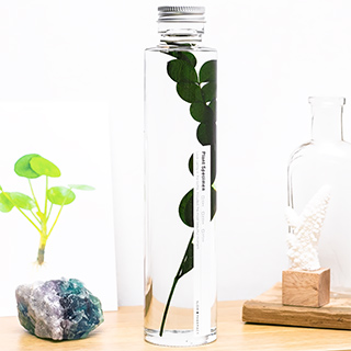 Plant in a large bottle - Slow Pharmacy 16