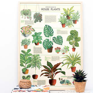 Large print - House plants
