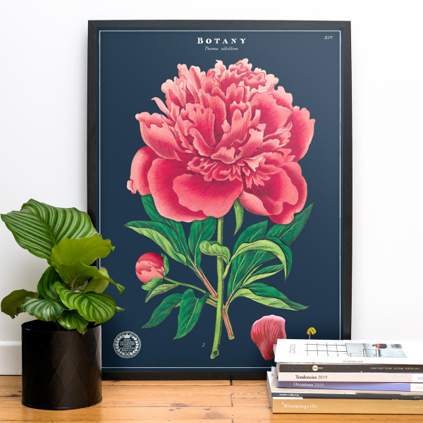Large print - Botany (peonie)