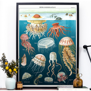 Large print - Jellyfish