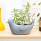 Planter - Pepper the pigeon