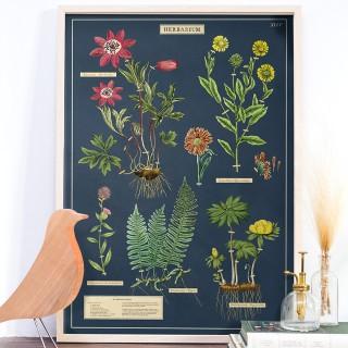 Large print - Herbarium