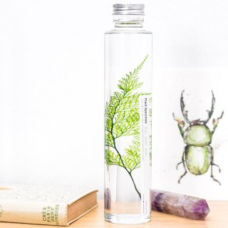 Plant in a large bottle - Slow Pharmacy 19