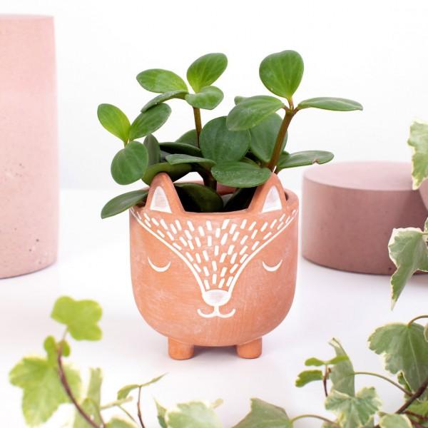 Terracotta planter - Cat's whiskers