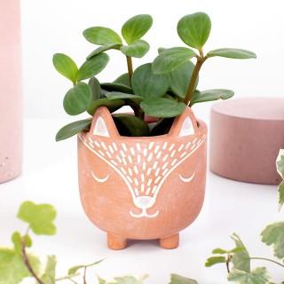 Terracotta planter - Petit renard