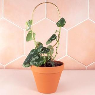 Mini plant stake - Botanopia