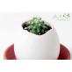 Eggling - cactus
