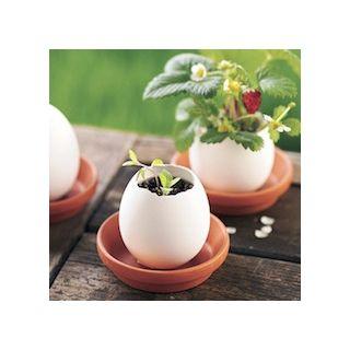 Eggling - fraises des bois