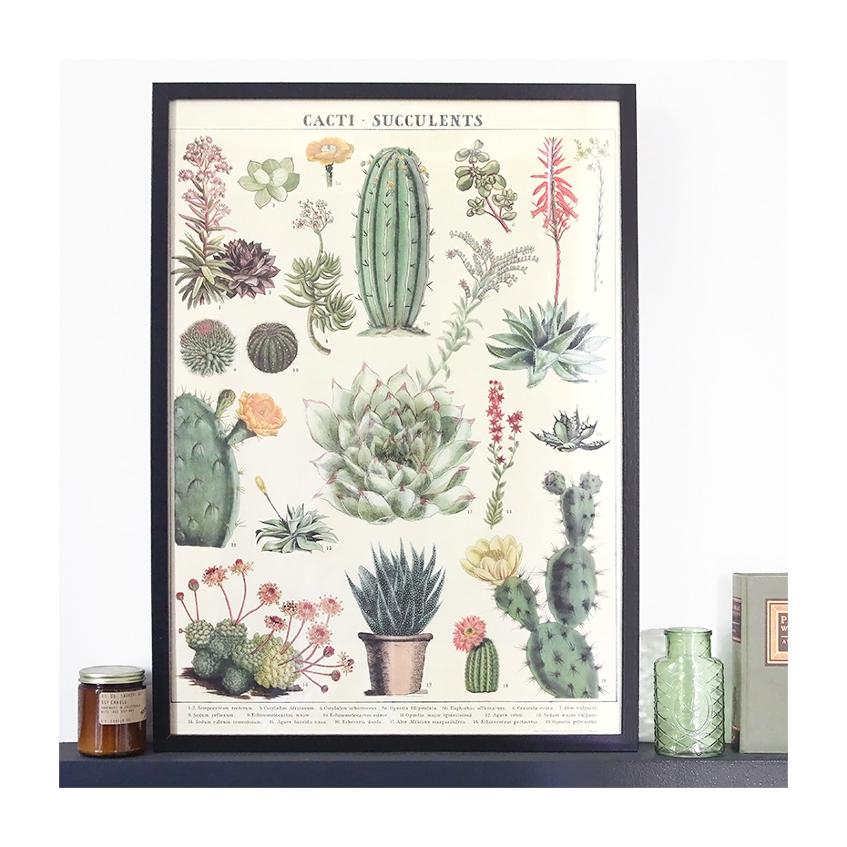 affiche poster vintage cactus et succulentes cavallini co. Black Bedroom Furniture Sets. Home Design Ideas