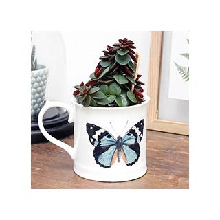 Curios mug - papillon