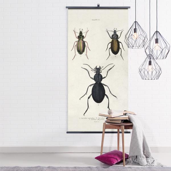 Biologica wall chart - beetles