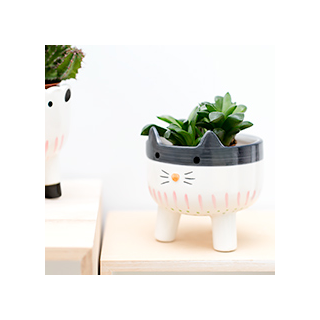 Animal flower pot - chat