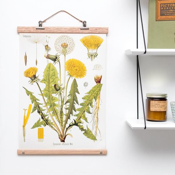 Affiche botanical - pissenlit