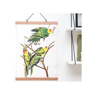 Affiche botanical - oiseaux