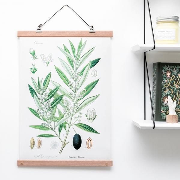 Affiche botanical - olive