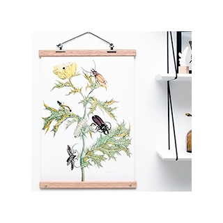 Affiche botanical - insectes