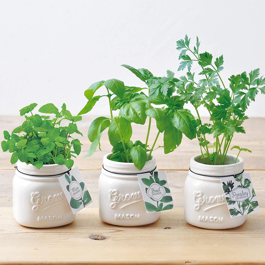 plante faire pousser dans un pot en forme de mason jar. Black Bedroom Furniture Sets. Home Design Ideas