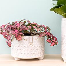 ethnic face ceramic planter by madam stoltz. Black Bedroom Furniture Sets. Home Design Ideas