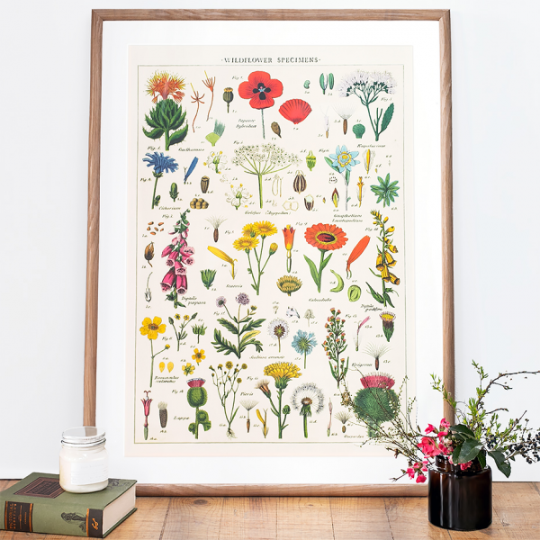 Wild Flowers Vintage Art Print Poster By Cavallini Co